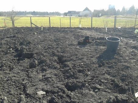 Auch Hund Kira fühlt sich sichtlich wohl inmitten der neu wachsenden Farm!