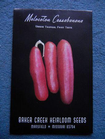 Cassabanana, eine Kürbisfrucht