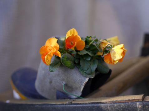 Auch ein Gummistiefel kann bepflanzt werden! Foto: Armin P.