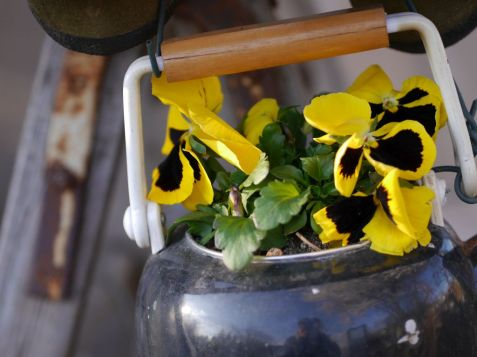 Urban Gardening - Ideen Foto: Armin P.