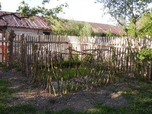 Bennis Weidenzaun am Tierfriedhof schlägt endlich aus.