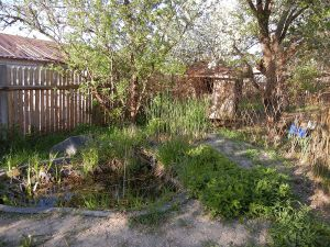 In unserem Teich wohnen mittlerweile viele Frösche. Dahinter steht der neue Weidenzaun, der später die Hühner vom Teich fernhalten soll.