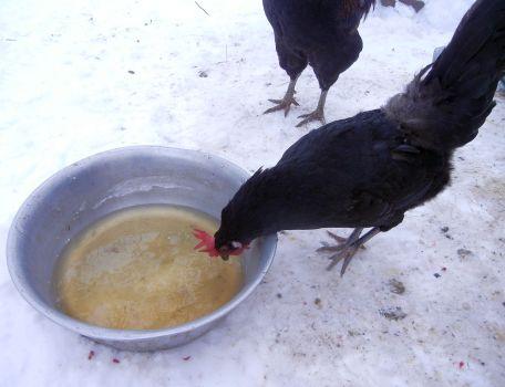 Gegen kalte Hühnerfüßchen gibts warmen Fencheltee.