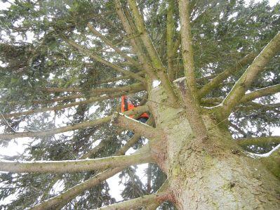 Klettern und sich selbst ausprobieren sind bei uns ausdrücklich erwünscht. Jan ist schon ein erfahrener Kletterer, vor ihm ist kein Baum sicher!