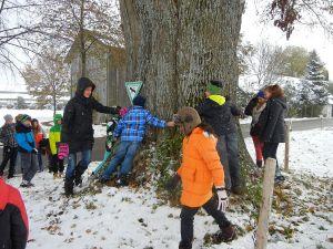 Wieviele Kinder braucht es, um den alten Baum zu umfassen? 7 Stück!