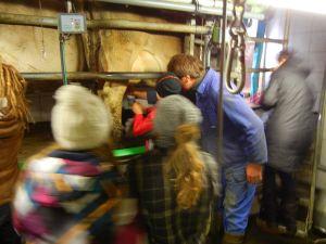 Frische Milch direkt von der Kuh, selbstgemolken! Die Kids staunten wie frische Milch in wirklichkeit schmeckt!