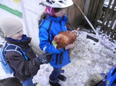 Gestaunt haben die Kids, wie sich die Hühner auf den Salat stürzten und ihn gierig verschlangen.