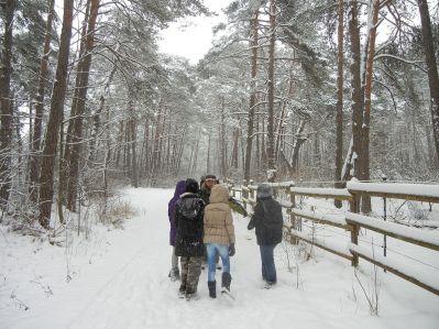 Märchenland Winterwald.