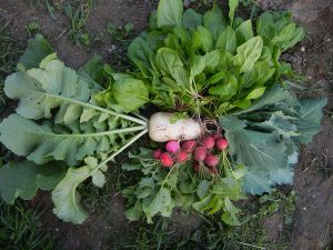 Unsere erste Ernte