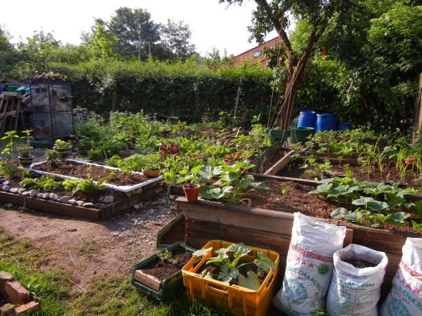 Unser Gemüsegarten Ende Mai