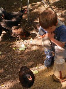 Noah und die Hühner