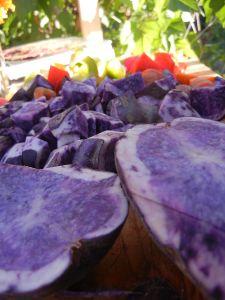 Kartoffelsorte Blauer Schwede.