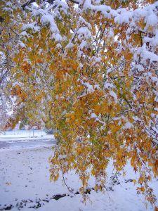 Verfrühter Wintereinbruch im Oktober.