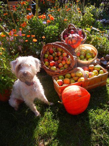 Ronja bewacht die Ernte