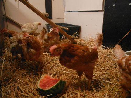 Jeden Tag andere Leckerbissen, von der Wassermelone bis zum Granatapfel.