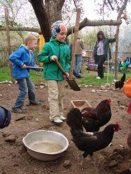 HRegenwürmer für die Hühner
