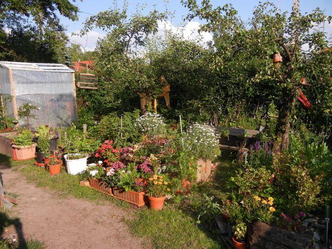Der Topfgarten auf der alten Farm.