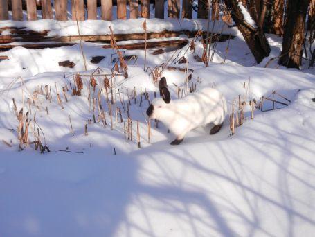 Hoffentlich wird 2014 bald Winter! Wir wollen Schnee!!