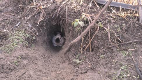 Ein selbstgegrabenes Höhlensyste, dient Maja und Scarface als Behausung. Da Maja jetzt fast 7 Jahre alt ist, darf se mit Scar ihre Rente im Freien verbringen.