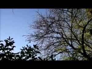 blauerHimmelBäume