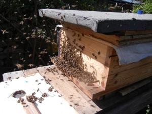 Einzug ins Bienenhaus