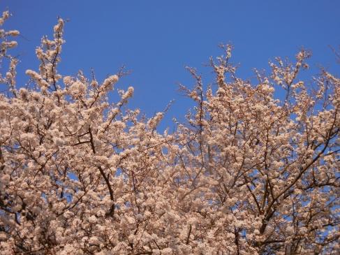 Mit einer Träne im Auge verabschieden wir uns von den urigen Obstbäumen auf der alten Farm. Auf der neuen wollen wir Spindelobstbäume setzen.