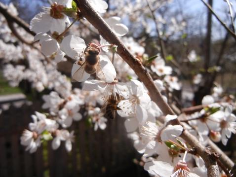 Da freuen sich alle Bienen und Hummeln der Nacjbarschaft.