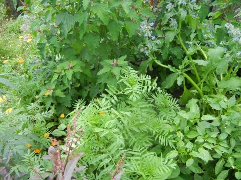 Prachtvolles Gartenchaos mit Baumspinat, Borretsch, Tagetes, Ringelblumen, Chili, Paprika und Roter Gartenmelde