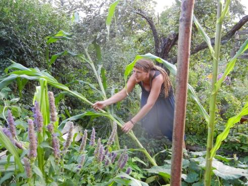 Ildi versucht den Mais zu retten.