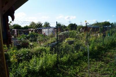 Blick von der Goldrutenwiese in die Farm.