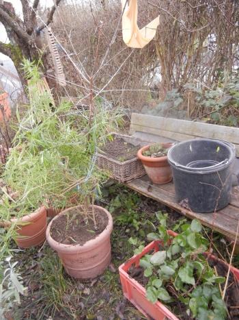 Auch all unsere mehrjährigen Pflanzen müssen umziehen und vorübergehend im Topf ausharren.