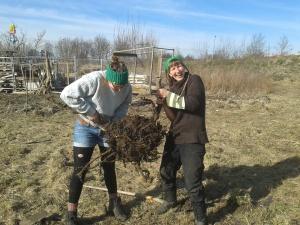Genug Arbeit auch ohne Baggerarbeiten: nach dem Retten einer Weide auf der neuen Farm