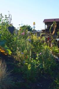 Buntes Blühen im Garten. Wilde Ecken sind eine Bereicherung für die Artenvielfalt und man kann immer wieder ein neues Kraut entdecken.