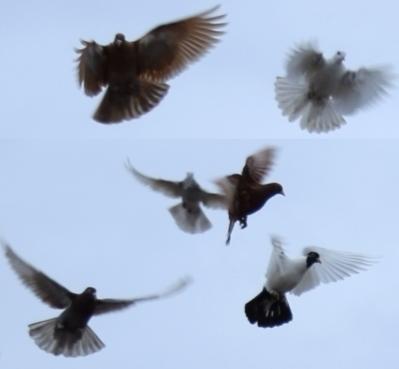 Auch Tauben wohnen jetzt bei uns!