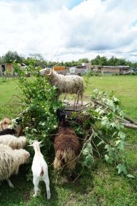 Schaf- und Ziegenhüpfburg mit Baumimitation