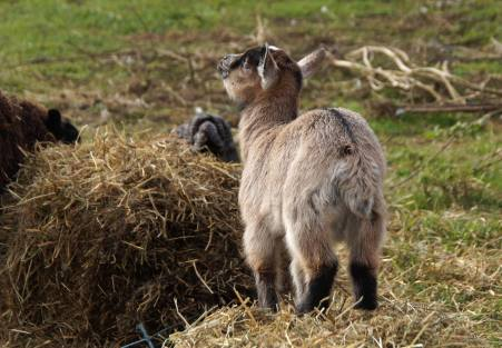 Die kleine Dame samt ihrer Mutter zogen in das Jugendhaus Lehmbau um.