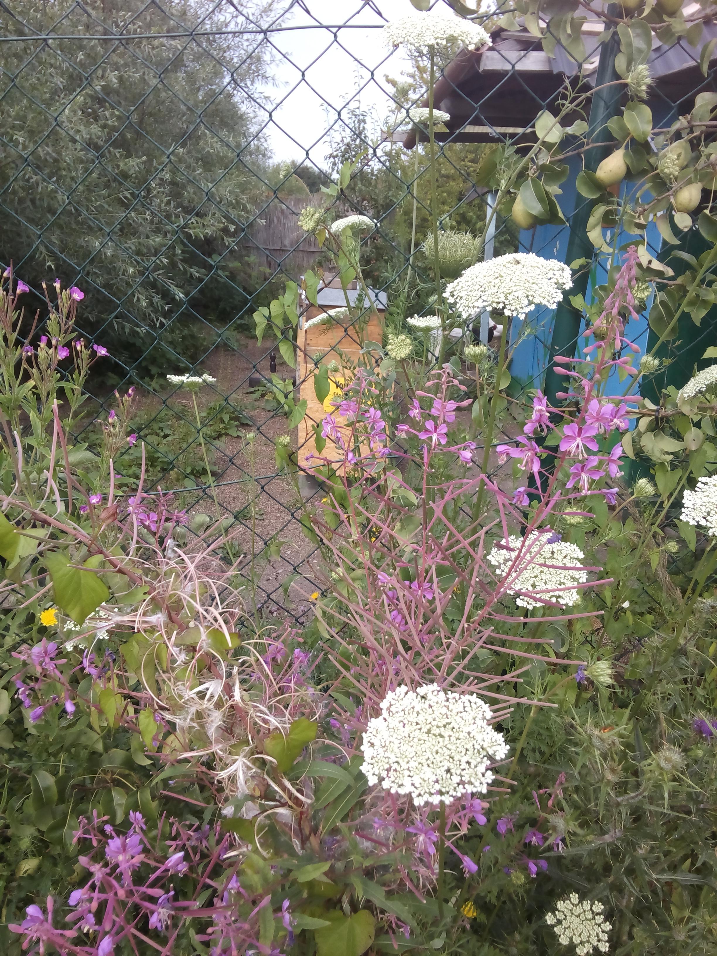 essbare pflanzen für kaninchen