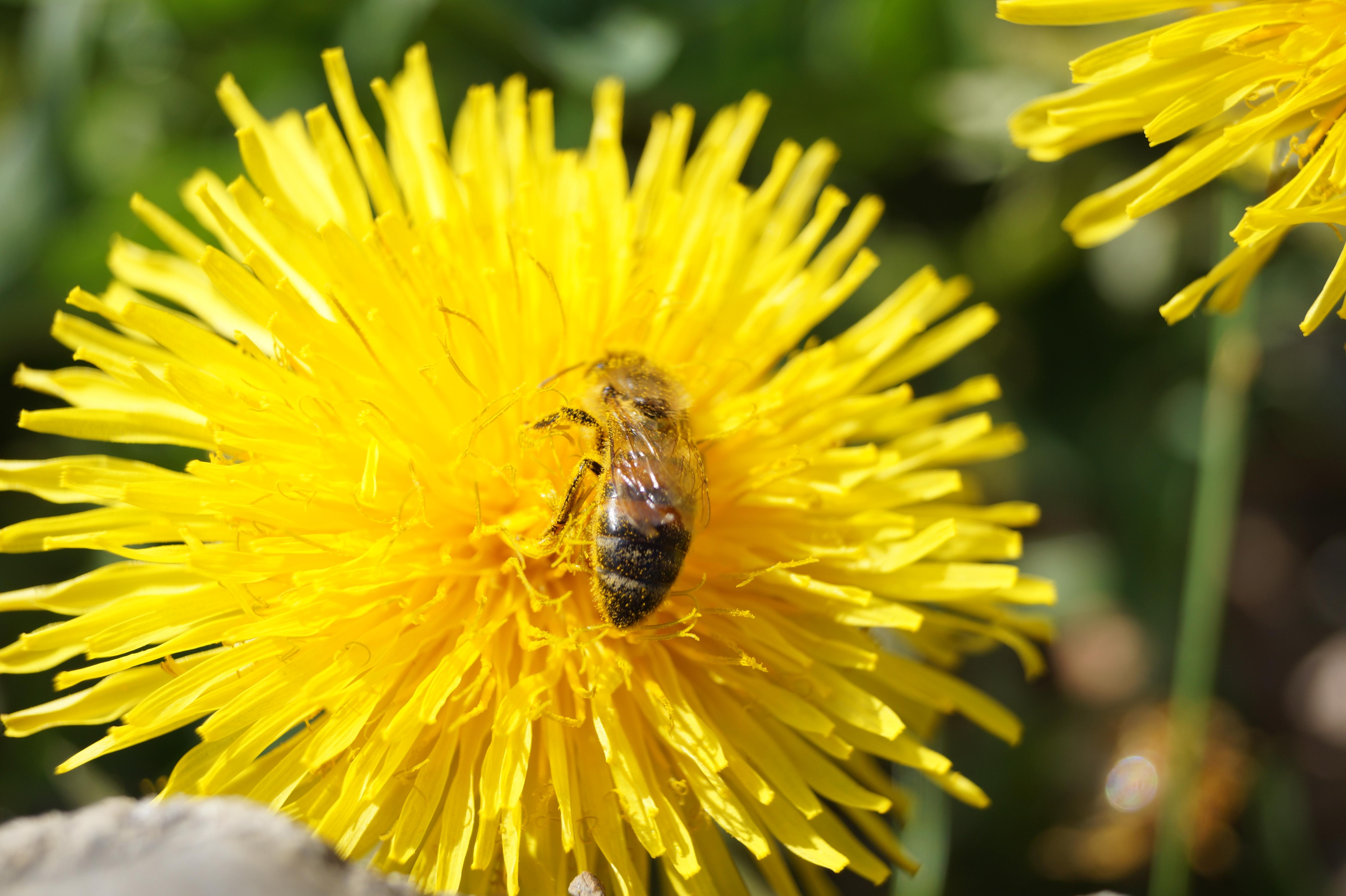 Arbeitsplatz Sicherheit Liefert Mesh Gesichtsmaske Hut Halten Insekten Bee Fliegen Gesicht-protector Imker Angeln Hohe Belastbarkeit